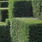 green, hedge, topiary